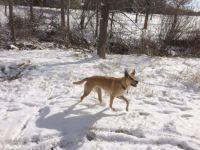 Bree in snow 2015