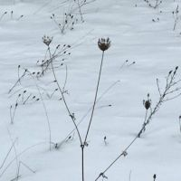 wild weeds in winter