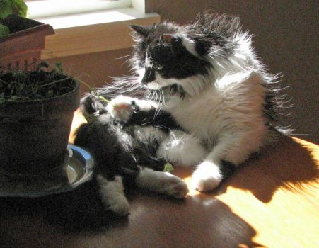 Heckle - harvesting the catnip  #4