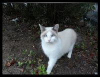 Adopted feral cat