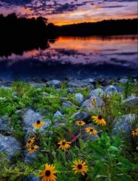 Susan aux yeux noirs au coucher du soleil par  Bruce Presse
