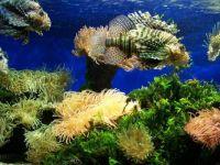 1  ~ 'Corals & some incognito 'fishitors'