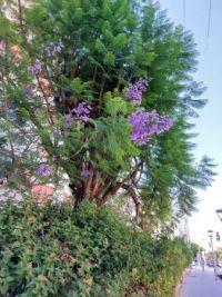 big purple flowers