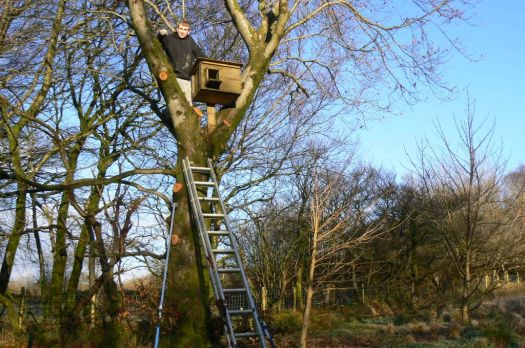 putting up an owl box