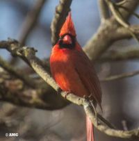 New Theme Tomorrow - Birds, Birdhouses, Birdbaths & Bird Feeders