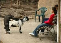 Popletený cuník, koza a deti