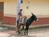 Boy on his donkey.