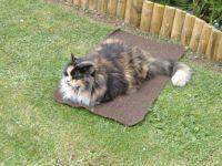 Garden - Tasha Cat on 'Her' Kneeling Mat!