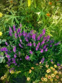 Flower Garden, Central Park, NYC