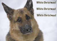 white christmas medium