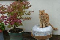 Ferdy - sitting on his magic mushroom...