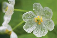 Skeleton flower.jpg