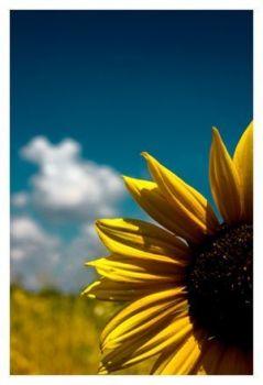 u r my sunshine,my only sunshine.....