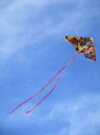 Let's go fly a kite !