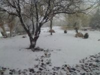 Feb 2013   Who says it doesn't snow in Tucson.