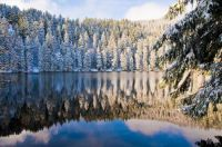 LAKE OF THE BLACK FOREST