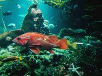 Vancouver Aquarium 4