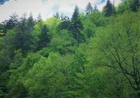 Tennessee Hillside