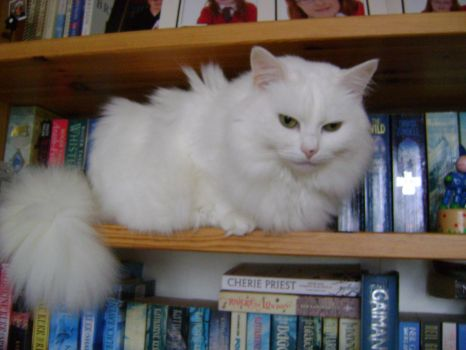 Freya - I think these shelves would look better if we replaced the books with a blankie and a pillow...