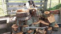Mish inspecting the woodpile