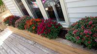 Flower box - fall flowers