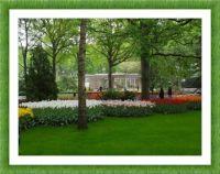 Vzpomínka na Keukenhof - Holandsko...  Remembrance of Keukenhof - Holland ...