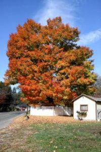 New England, Fall-2016