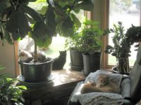 4 cats at front window