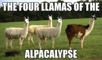 The Four Llamas of the Alpacalypse