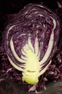 Almost a tree... Red cabbage