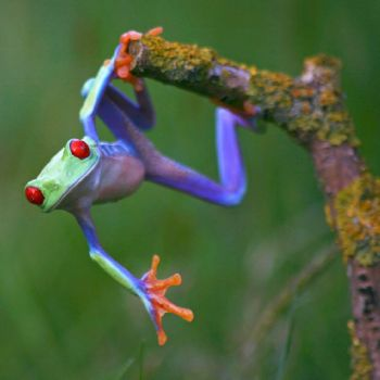 Forget Spiderman -I'm A Frog,man!