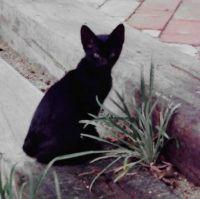 Spike when a kitten, 1982
