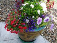 1 of 6 Flowerpots