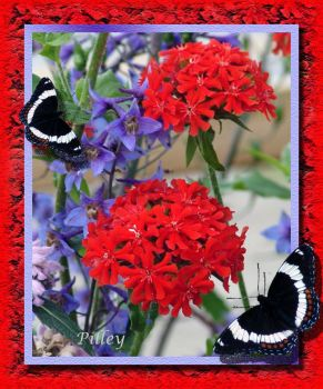 Flowers - Red  ***  Butterflies - Black