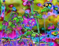 Floral psychedelia!!