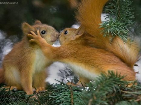 squirrel smooch