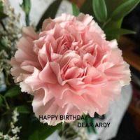 Happy Birthday, dear Ardy!