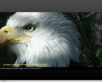 I'll miss you handsome Norfolk male eagle!