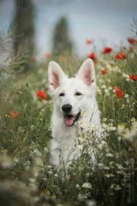 Very happy dog