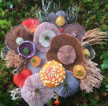 Fabshrooms