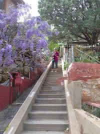 More stairs in Bisbee with my friend