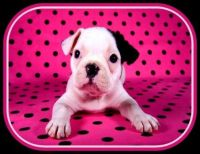 Pinknblack Puppy Love
