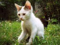 Kitten in springtime