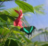 Green Butterfly 2