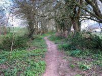Woodland path near golf course