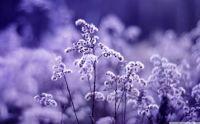macro-beautiful-flowers-white-nature-monochrome-bokeh