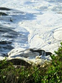 foamy sea