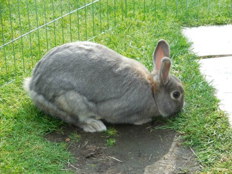 my bunny