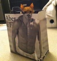 Kitties great abs