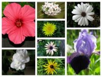 Flower col 1